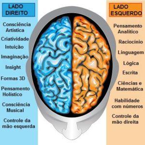 cerebro-hemisferios